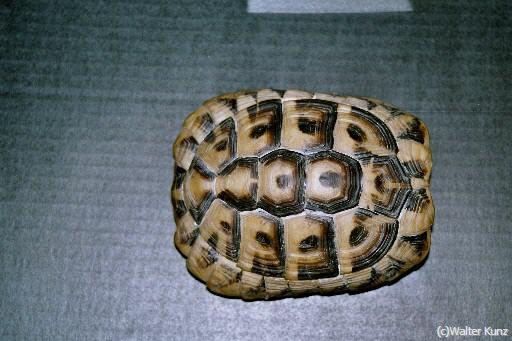 Jobs >> Schildkröten-Panzer